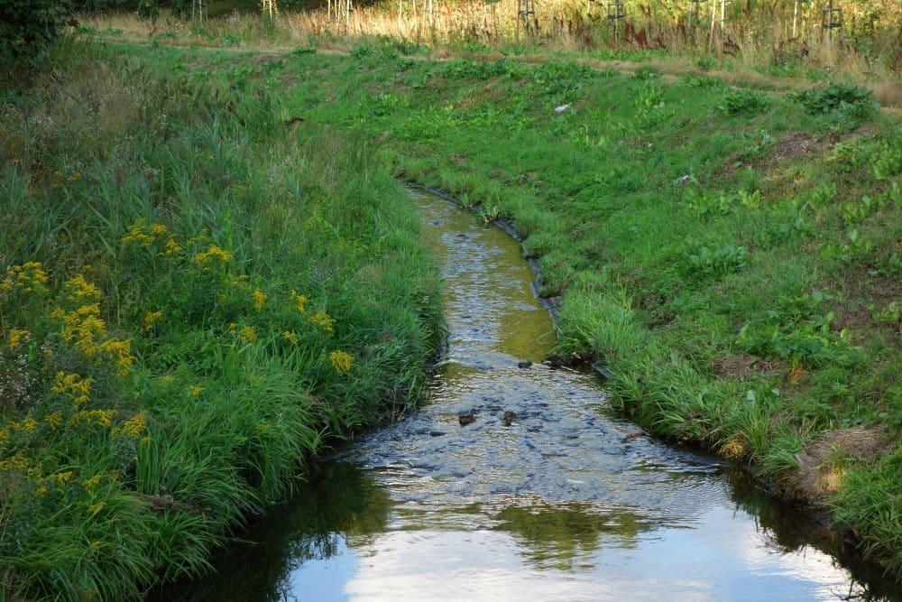 Potok Służewiecki