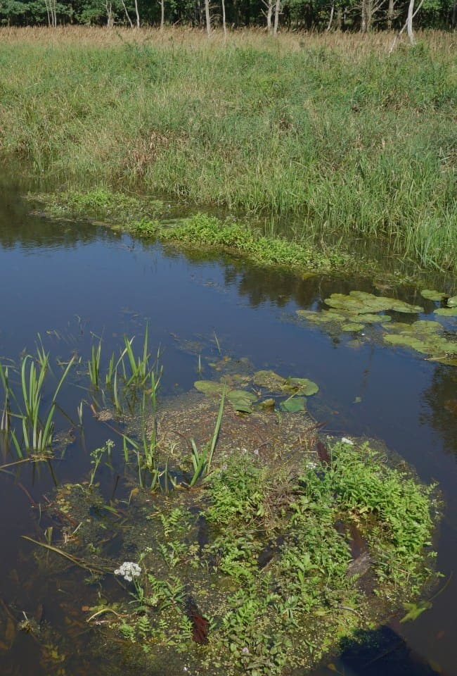 Naturalnie wykształcona roślinność na brzegu rzeki