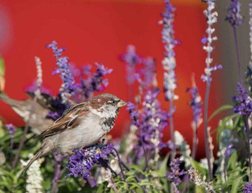 Remonty bezpieczne dla ptaków i nietoperzy